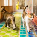 Phuket Dog Inn Cat Inn Pets Inn Pets hotel โรงแรมสุนัข โรงแรมแมว โรงแรมสัตว์เลี้ยง