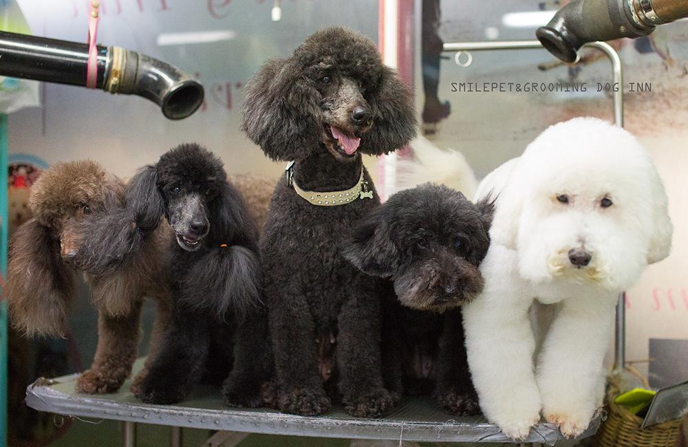 Grooming smile pets grooming dog inn phuket smile for A family pet salon