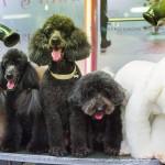 Phuket Dog Inn Pets Inn Pets hotel โรงแรมสัตว์เลี้ยง