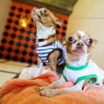 Phuket Dog Inn Pets Inn Pets hotel โรงแรมสุนัข โรงแรมแมว โรงแรมสัตว์เลี้ยง