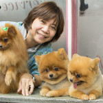 Grooming dogs Pets salon